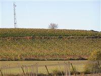 vinohrady-3
